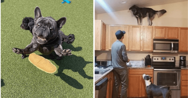 list of 15 funny dog pictures | thumbnail left pic is dog about to catch airborne object, thumbnail right is dog on high cupboard while owner and other dog observe from below