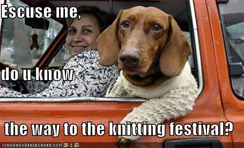 car,dachshund,driving,knitting,sweater