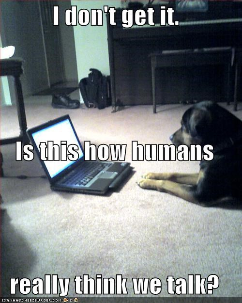 confused laptop lolspeak rottweiler