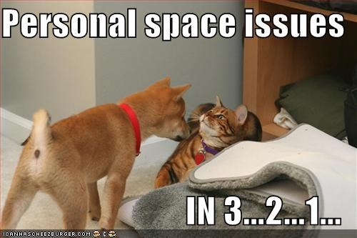 countdown issues lolcats personal space shiba inu