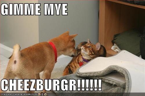 Cheezburger Image 1434812160