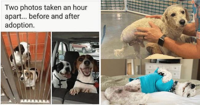 """list of 12 before and after animal adoption pictures 