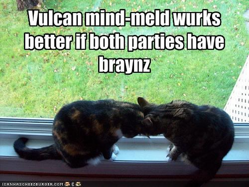 brains,lolcats,mind meld,Star Trek,Vulcan