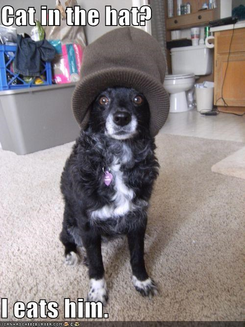 border collie,lolcats,murder