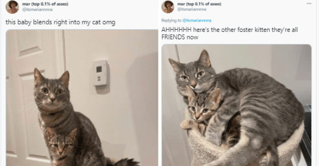 compilation of 15 animal tweets | thumbnail cat tweet on right, cat tweet on left