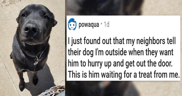 pics and vids of the cutest animals of the week | thumbnail includes a picture of a dog 'I just found out that my neighbors tell their dog I'm outside when they want him to hurry up and get out the door. This is him waiting for a treat from me. u/powaqua'