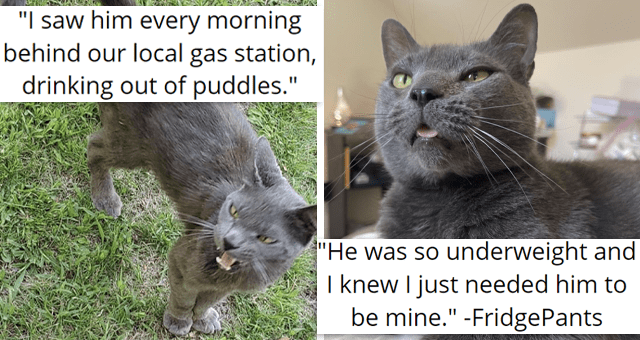 viral imgur thread about a stray cat getting adopted | thumbnail includes two pictures of a grey cat 'I saw him every morning behind our local gas station, drinking out of puddles. He was so underweight and I knew I just needed him to be mine. -FridgePants'