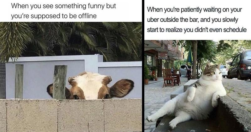 funny memes, animal memes, dumb memes, wholesome memes, cat memes, dog memes, stupid memes, i can has cheezburger