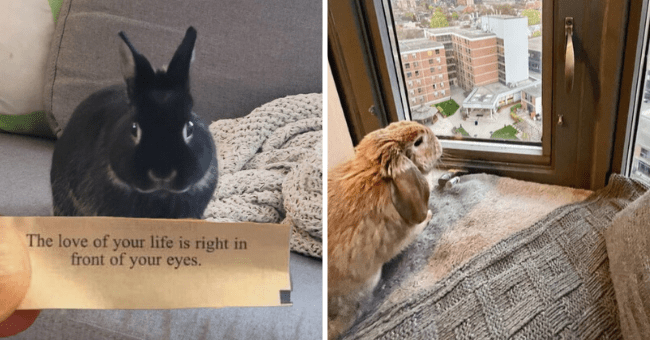 """list of 18 pictures of rabbits 