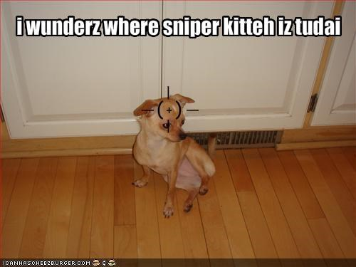 chihuahua kitteh lolcats nervous sniper targeted - 1436364032