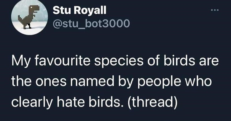 A humorous Twitter thread about various birds that were likely named by people who don't like birds.