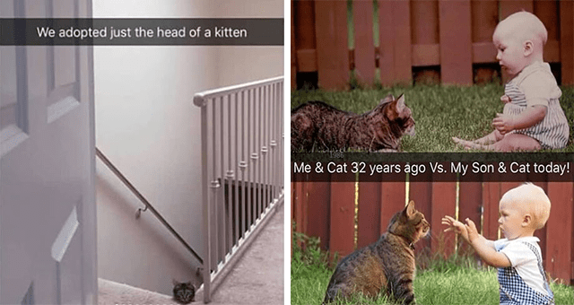 collection of cat Snapchats | thumbnail includes two snaps including a picture of a cat poking its head up the stairs 'Stairs - We adopted just the head of a kitten' and two pictures of babies alongside cats 'Face - 1986 Me & Cat 32 years ago Vs. My Son & Cat today!'