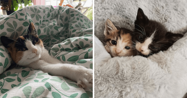 list of 16 images of cats tucked into blankets | thumbnail left cat cozy with legs outstretched, thumbnail right two kittens cuddling together tucked in