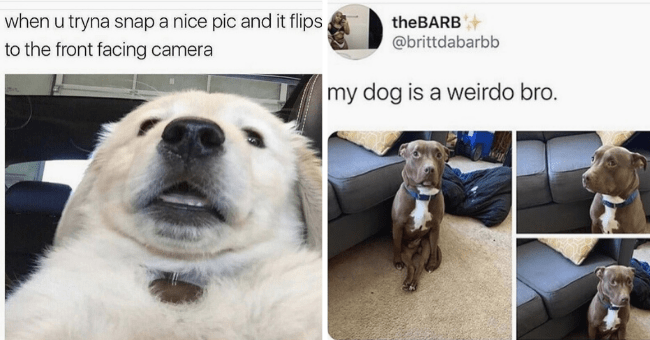 """list of 20 dog memes 