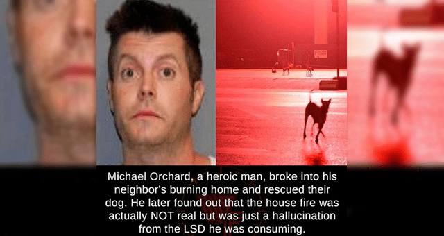 ridiculous animal facts and stories | thumbnail includes a mugshot and a picture of a dog 'Dog - Michael Orchard, a heroic man, broke into his neighbor's burning home and rescued their dog. He later found out that the house fire was actually NOT real but was just a hallucination from the LSD he was consuming. Photo courtesy of STATE POLICE / AFP @factsweird'