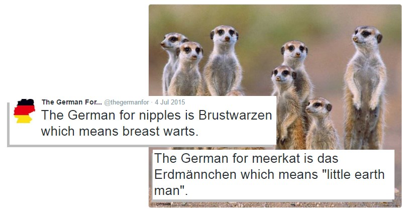 twitter german language nipples - 1437445