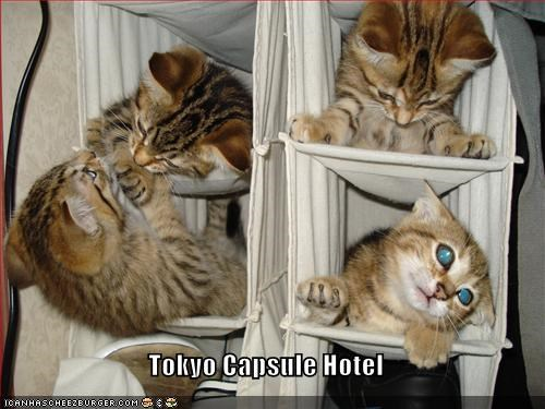 cute hotel kitten lolcats lolkittehs squished tokyo - 1437777152