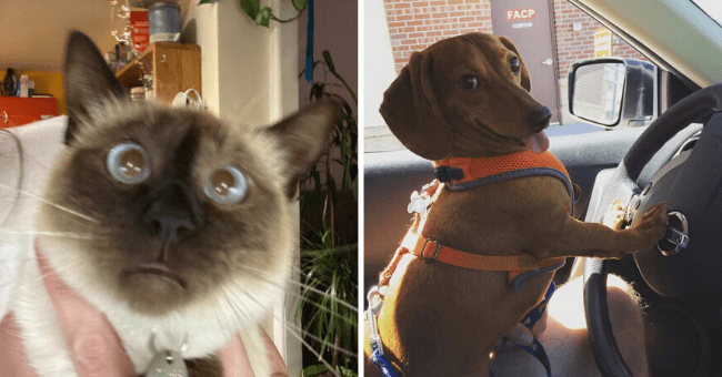 15 images of animals being weird | thumbnail left picture cat making weird face, thumbnail right picture dog sitting behind wheel in car smiling