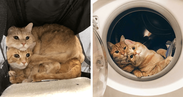 pictures showing why two cats are better than one | thumbnail includes two pictures including two cats sitting in a washing machine and two cats sitting in a cat carrier