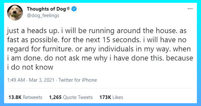 fresh collection of thoughts of dog tweets | thumbnail includes one tweet ''