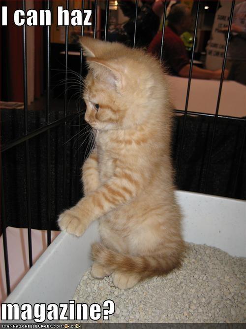 cute kitten litterbox lolcats lolkittehs magazine - 1438538496