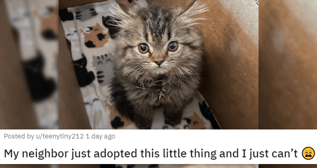 posts of animals newly adopted this week | thumbnail includes a picture of a kitten 'My neighbor just adopted this little thing and I just can't u/teenytiny212'