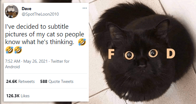 This week's collection of cat tweets | thumbnail includes a picture of a black cat with the word food spelled with its eyes and one tweet 'Cat - Dave ... @SpotTheLloon2010 I've decided to subtitle pictures of my cat so people know what he's thinking. FO OD 7:52 AM - May 26, 2021 - Twitter for Android 23.9K Retweets 574 Quote Tweets 123K Likes'
