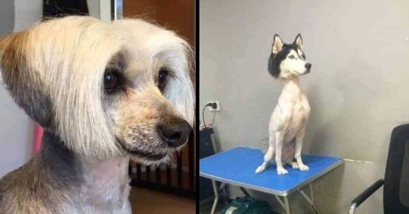 dogs with goofy and dumb haircuts