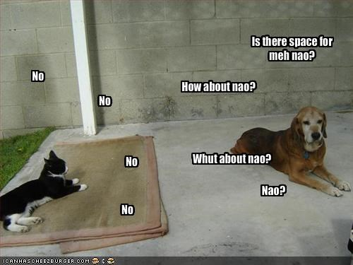 annoying,dogs,lolcats,loldogs,nap,rug,sharing,space,whining