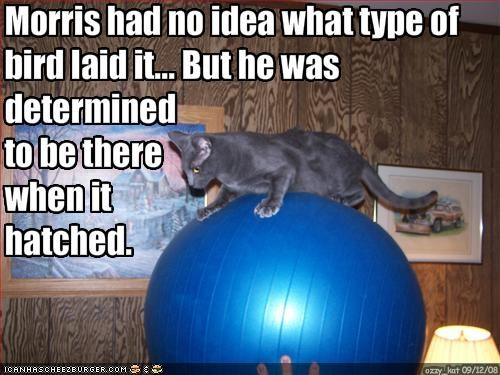 Morris had no idea what type of bird laid it... But he was 