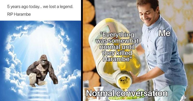 harambe, harambe memes, dicks out for harambe, funny memes, funny tweets, twitter memes, memes, lol, funny, classic memes