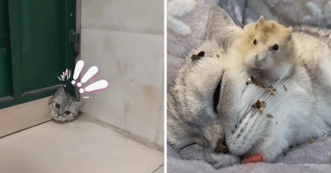 list of 5 cat videos from instagram | thumbnail left cat sticking its head out of hole in door with exclamation points above head, thumbnail right gerbil sitting on head of sleeping cat