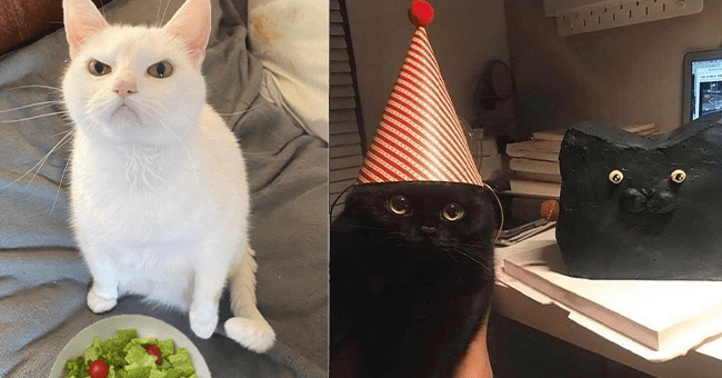 15 silly cat images | thumbnail left is white cat angry face with plate of salad, thumbnail right is black cat wearing birthday hat next to small model of himself