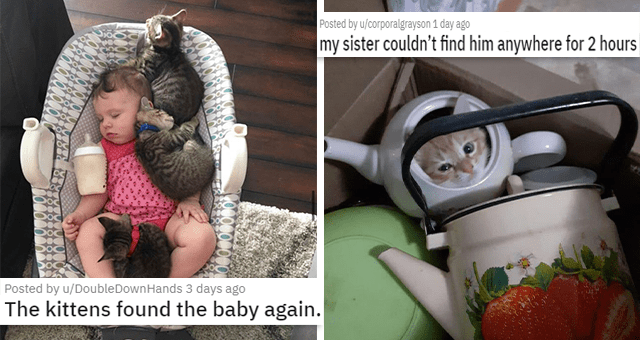 pics and vids of the cutest animals of the week | thumbnail includes two pictures including kittens and a baby in a crib 'The kittens found the baby again. u/DoubleDownHands' and another of a kitten in a teapot 'my sister couldn't find him anywhere for 2 hours u/corporalgrayson'