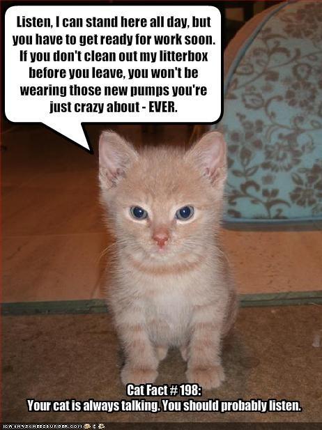 cute kitten lolcats lolkittehs talking threats - 1441566976