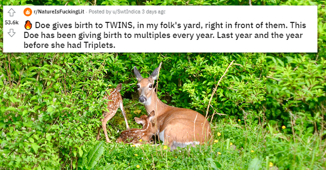 10 images of doe giving birth and reddit comments | thumbnail picture of mom doe with baby deer, with caption from reddit title