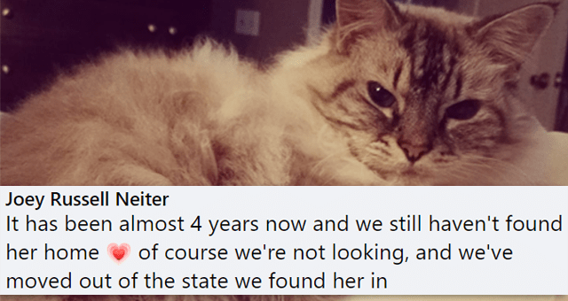 Facebook comments of stories of pets who were fostered being adopted | thumbnail includes one picture of a cat and one Facebook comment 'Cat - Joey Russell Neiter It has been almost 4 years now and we still haven't found her home of course we're not looking, and we've moved out of the state we found her in 42'