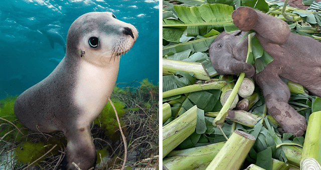 this week's collection of pictures that are worth more than 1000 words | thumbnail includes two pictures including an endangered Australian baby seal and a baby animal having fun in some cut up trees