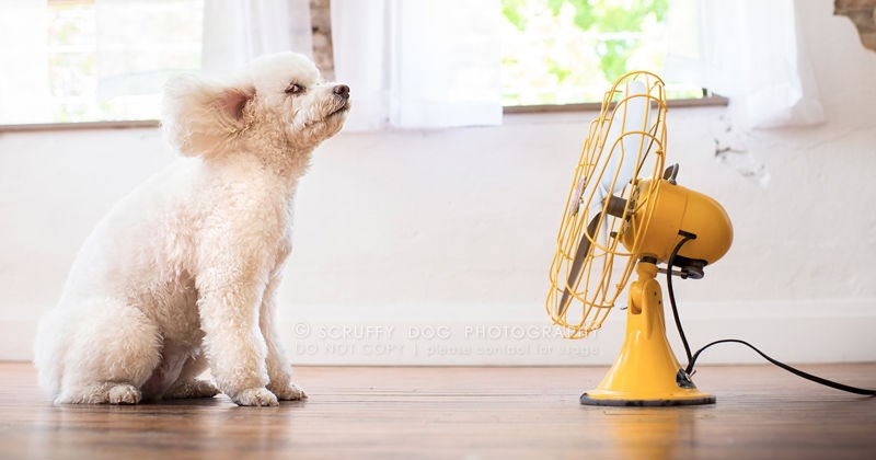 dogs standing next to high-powered fans that express their fur the way nature intended