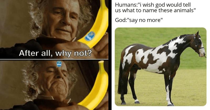 random, funny, lol, funny memes, random memes, dank memes