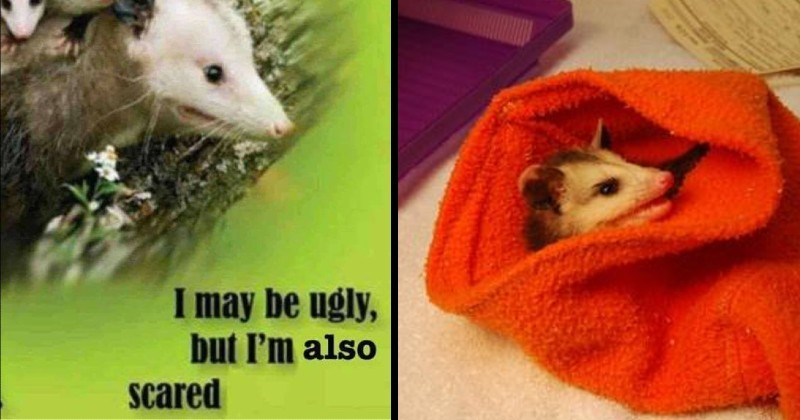 fun pictures of opossums