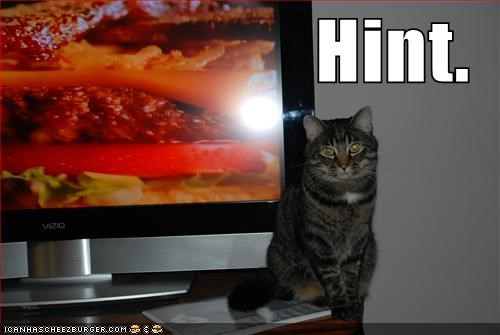 cheezburger hint hungry lolcats TV want - 1443595008