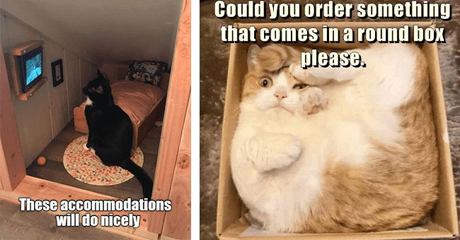 """list of 25 cat memes 