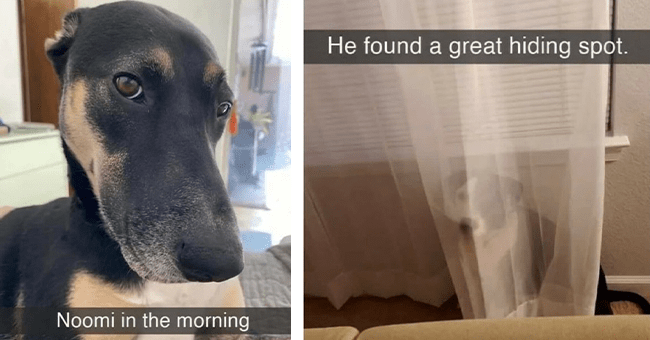 """list of 17 dog snapchats 