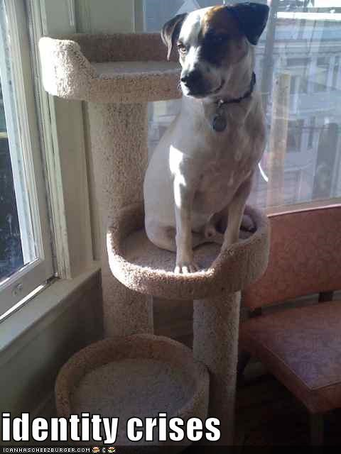 jack russel terrier lolcats Sad - 1444612864