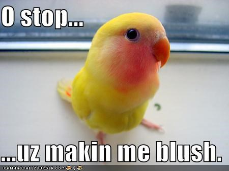bird,blushing,compliment,cute,lolbird,lolbirds,parakeet