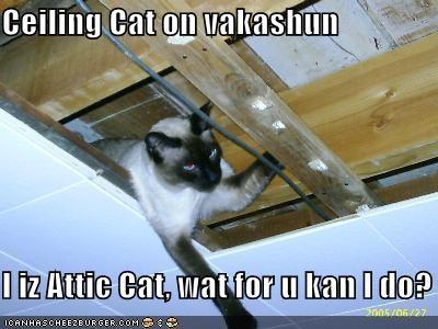 attic cat ceiling cat helping lolcats secretary vacation - 1445310208