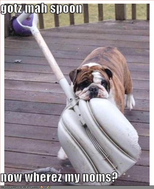 bulldog,nom nom nom,shovel,spoon