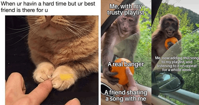 collection of wholesome animal memes | thumbnail includes two memes including a cat holding a human's finger 'Hand - When ur havin a hard time but ur best friend is there for u bokuwachikuwa tumblr' and a monkey taking a tangerine out of a car 'Primate - Me, with my trusty playlist Me, now adding this song to my playlist, and listening to it on repeat for a whole week A real banger A friend sharing a song with me'