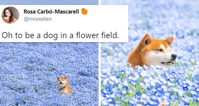 """16 animal tweets 